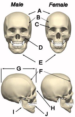 Skull Theorie